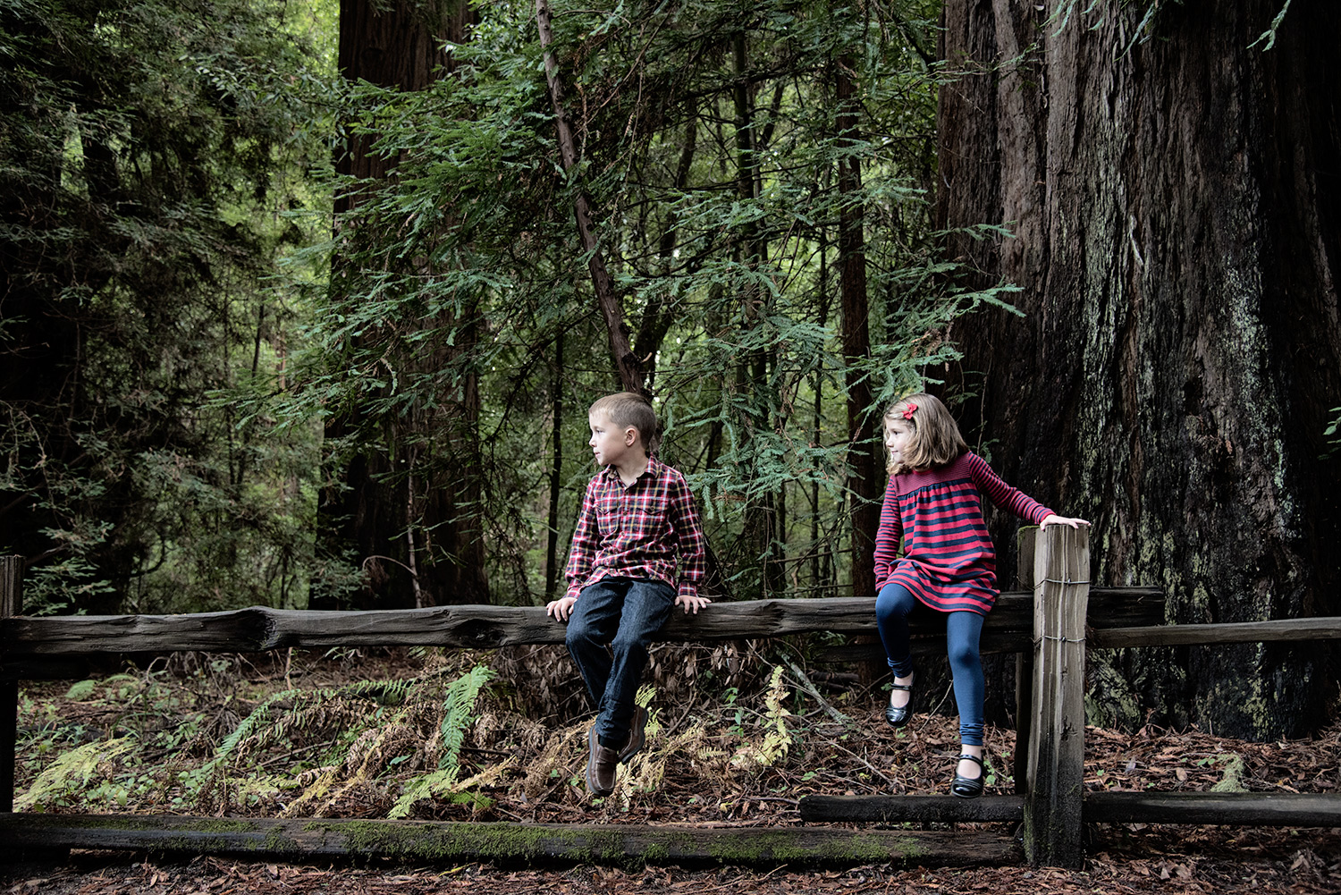 santa cruz family portrait locations henry cowell park